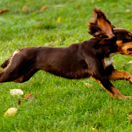 by James Blyth Currie - Animals - Dogs Running