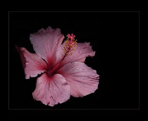 20060920_Flor101-1