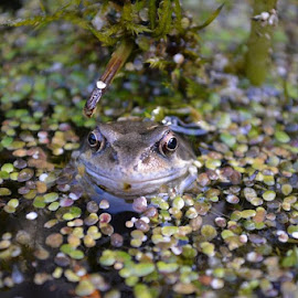 Frog by Mandy Dale - Novices Only Wildlife