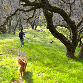 Hiking by Kathleen Koehlmoos - Animals - Dogs Running ( green hills, hiking is the best exercise, hiking with dogs, briones regional park, hiking, , renewal, green, trees, forests, nature, natural, scenic, relaxing, meditation, the mood factory, mood, emotions, jade, revive, inspirational, earthly )