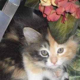 Am I Pretty by Snow Losh - Animals - Cats Kittens (  )