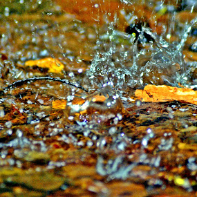 Drops by Charles Shope - Nature Up Close Natural Waterdrops ( water, natural light, water drops, nature, color, pool, waterfall, leaves,  )