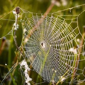 Spider web by Ioan Todor - Nature Up Close Webs ( spider web macro details nature grass, Free, Freedom, Inspire, Inspiring, Inspirational, Emotion )