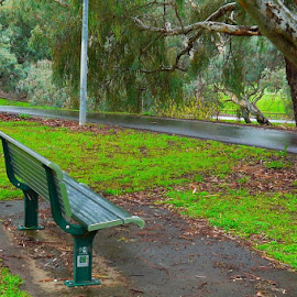 Have A Seat by Leigh Martin - City,  Street & Park  City Parks ( seat path trees park wet )
