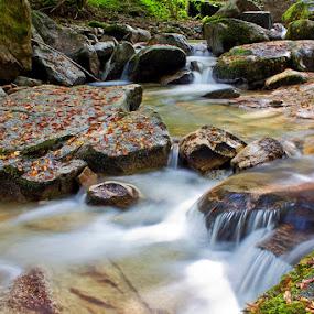 by Siniša Almaši - Nature Up Close Water ( water, up close, nature, stone, rock, river,  )