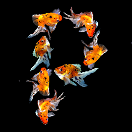 Goldfish P by Janna Morrison - Typography Single Letters ( p )
