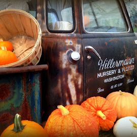 Chevy Fall Holidays Prop by Steve Parsons - City,  Street & Park  Street Scenes ( holiday, pickup, chevrolet, five window, truck, pumpkins, prop, rusty, rustic, chevy )