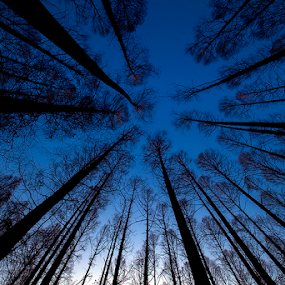 Rising The Sky by Nyoman Sundra - Landscapes Forests ( mizumoto, silhouette, tokyo, trees, forest )