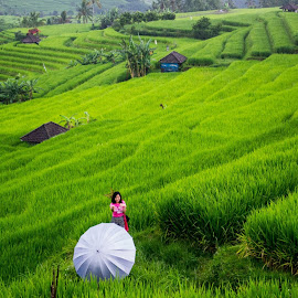 Terrace paddy field Bali by Debjyoti Basak - Landscapes Prairies, Meadows & Fields
