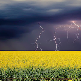 canola crop by Steve Ryan - Landscapes Prairies, Meadows & Fields ( south australia, lightning, canola, barossa valley, landscape, fields )