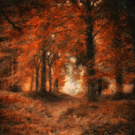 Autumn 1 by Kelly Murdoch - Nature Up Close Trees & Bushes ( dreamy, uk, forset, ornage, woods, ztam, england, season, autumn, iow, trees, isle of wight, misty )