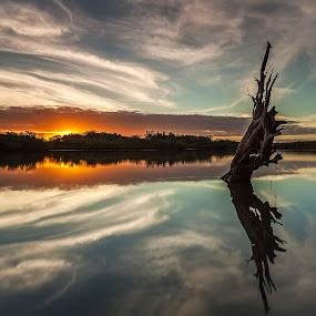 Reflection by Steve Badger - Landscapes Sunsets & Sunrises ( reflection, sunset, australia, lake, log,  )