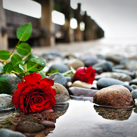 Roses by Luke Moseley - Digital Art Things ( rose roses flowers sea beach water sky reflections art beauty )