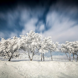 frozen trees by Cristi Rus - Nature Up Close Trees & Bushes ( sky, winter, nature, tree, snow, frozen )