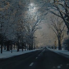 Allee in Light by Hannah Maison - Digital Art Places ( winter, blue, trees, allee, light,  )