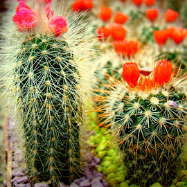 Needles and spines by Tihomir Beller - Nature Up Close Other plants