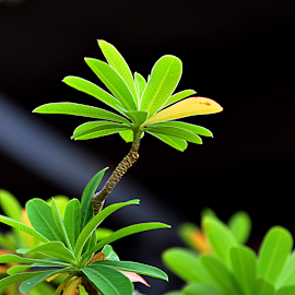 by Koento Birowo - Nature Up Close Leaves & Grasses
