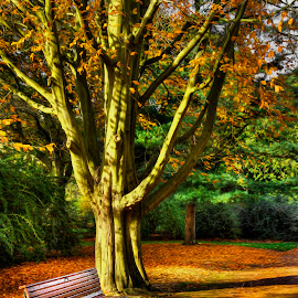 Edinbugh Botanics Benchr by Don Alexander Lumsden - City,  Street & Park  City Parks