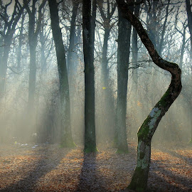 Foggy forest by Radita Watkinson - Nature Up Close Trees & Bushes