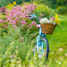 Summer Flowers by the Bog by Olga Gerik - Transportation Bicycles ( bicycles, rides, summer, flowers, bicycle )
