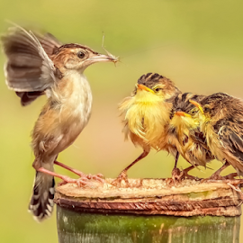 Served Lunch by MazLoy Husada - Animals Birds