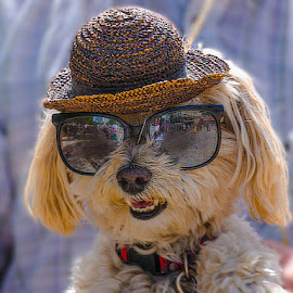 Hello Its Me by Jun Sigue - Animals - Dogs Portraits ( cute, smile, dog, portrait, hat,  )