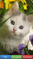 Screenshot of Cute Kitty Cats HD Wallpapers