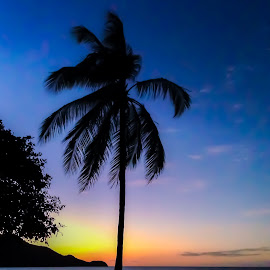 Tropical Sunset by Jack Brittain - Instagram & Mobile iPhone ( palm tree, sunset, guanacaste, costa rica, pacific, ocean, iphone5 )