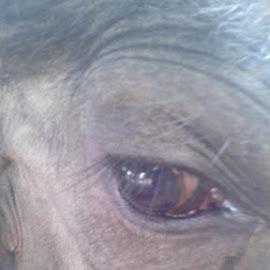 Cow eye'sPic by me by Abhishek Meghwanshi - Animals Other