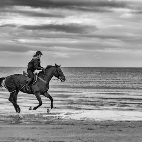 by Lieven Lema - Uncategorized All Uncategorized ( ©2014, girl, horse, lieven lema, beach )