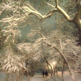 first snow by Alexandru Andreescu - City,  Street & Park  City Parks ( snow, winter, cold )
