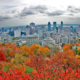 Autumn In Montreal by Marco Antonio - City,  Street & Park  Skylines ( quebec, canada, october, leaves, autumn montreal )