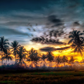 Kelapa by Randi Pratama M - Instagram & Mobile Android ( sony, xperia, coconut, sunset )