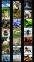 Screenshot of Animal Wallpapers