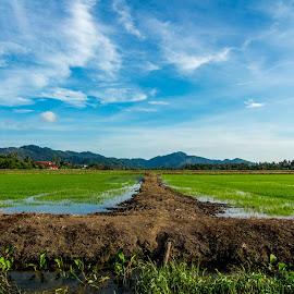 paddy field off season by Teoh Ying - Landscapes Prairies, Meadows & Fields ( field, sungai, dry, burung, paddy, hot, landscape, photography )