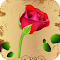 Rose Live Wallpaper 1.6 Apk