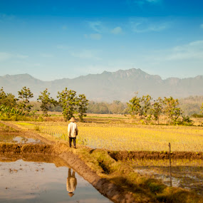by Ahmat Supriyadhi - Landscapes Prairies, Meadows & Fields ( farmer, nature, indonesia, java, landscape, fields )