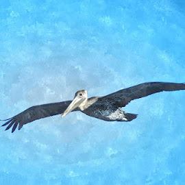 Soaring by David Hannah - Digital Art Animals ( bird, fly, flight )