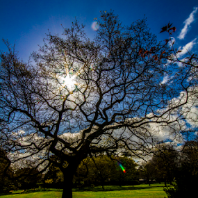 by Paul Scullion - Nature Up Close Trees & Bushes ( warm, sky, park, tree, shaddows, clour, light, spring, sun )