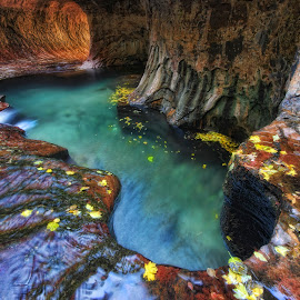 Subway in the Fall by Michael Otter - Landscapes Waterscapes ( fall colors, zion natioanl park subway, pools,  )
