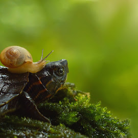 just a friend by Vianz . - Animals Amphibians ( macro, snail, turtle, animal )