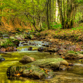 Calm Water by Siniša Biljan - Nature Up Close Water