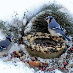 Lunch. by Carolyn Kernan - Animals Birds (  )