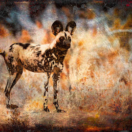 African Wild Dog Textured by Gary Want - Digital Art Animals ( okavango delta, botswana, lagoon, african_wild_dog, safari, africa, #wildlife, #locations )