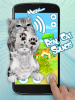Screenshot of Talking Cat Funny Kitten Sound