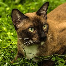cat1 (1 of 1).jpg