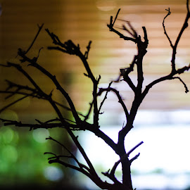 Silhouette  by Angelo Perrino - Nature Up Close Trees & Bushes