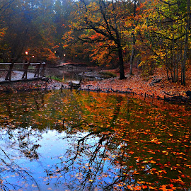 Behind the colours by Danca Emanuel - Landscapes Forests ( fall, color, colorful, nature )