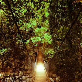 Minnamurra Bridge by Corina Dodovski - Landscapes Forests ( water, sinlight, forrest, trees, bridge, rocks, rainforest,  )