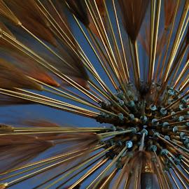 by Lori Kulik - Abstract Patterns ( abstract,  )